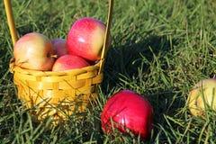 Busket de manzanas Imagenes de archivo