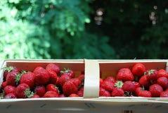 busket strawberryes 库存图片