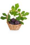 Busket van verse fig. met bladeren op wit Royalty-vrije Stock Afbeelding