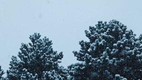 Buskiga träd i häftig snöstorm stock video