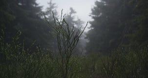Buskigt grönt gräs på en gräsmatta i de Carpathian bergen i höst i slo-mo stock video