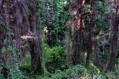 Busksnår av träd med olika växter i den avlägsna djungeln royaltyfri fotografi