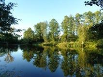 Busksnår av träd och buskar runt om dammet på en solig sommardag arkivbilder