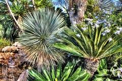 Busksnår av tropiska växter Arkivfoto