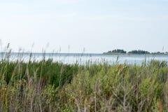 Busksnår av vasser och Chesapeakefjärden på Maryland den östliga kusten nära vaggar Hall, medicine doktor royaltyfri fotografi