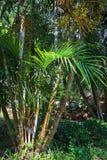 Busksnår i rainforesten Arkivbild