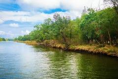 Busksnår på flodbanken Royaltyfri Fotografi