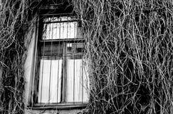 Busksnår på väggen Arkivfoton