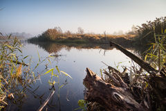 Busksnår runt om floden i morgonen Royaltyfri Bild