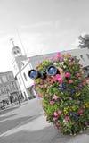 busksnår som spionerar det hemliga medlet Royaltyfria Foton