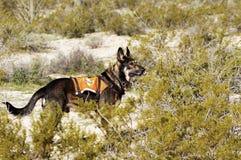 Busque el perro Foto de archivo libre de regalías