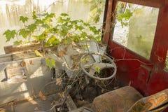Buss för indier för kabin som bruten övergiven smutsig röd är bevuxen med växter grön murgröna och mossa arkivbilder