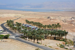 Bussar i den Masada oasen Royaltyfri Fotografi