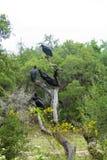 Bussard-Baum Stockfotografie