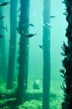 Busselton跳船:水下的礁石 免版税库存照片