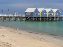BUSSELTON VÄSTRA AUSTRALIEN, AUSTRALIEN NOVEMBER 9, 2015: busseltonbrygga och kormoran på stranden i västra Australien royaltyfri bild