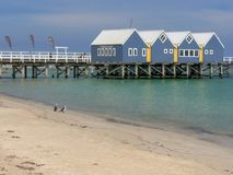 BUSSELTON, WEST-AUSTRALIEN, AUSTRALIEN 9. NOVEMBER 2015: busselton Anlegestelle und Kormorane auf Strand in West-Australien lizenzfreies stockbild