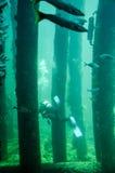 Busseltonpier: Vissen, Ertsader en Scuba-duiker stock fotografie