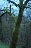 Bussola nella foresta della Germania Fotografia Stock