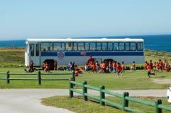 bussskola Arkivfoton