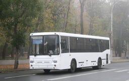 busswhite Royaltyfria Foton