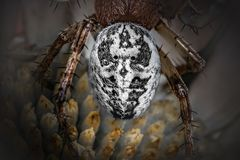 The bust of spider with wolf face - drawing by nature. Wolf`s face on a spider`s bust in close-up - black and white photo on dark background. Artistic concept royalty free stock images