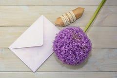 Busta, regalo ed allium su un fondo leggero Fotografia Stock