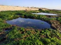 Bustan HaGalil sandy beach with rocks near Acre Haifa Israel. Akko seashore Mediterranean sea. Clear water stones. Bustan HaGalil sandy beach with rocks near stock photos