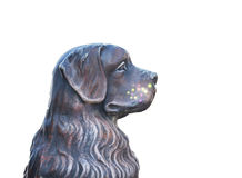 Busto de los perros Fotografía de archivo