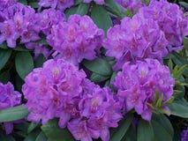 Busto del fiore Immagine Stock
