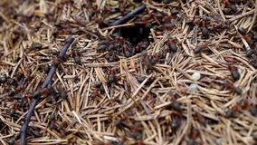 Busy anthill stock video