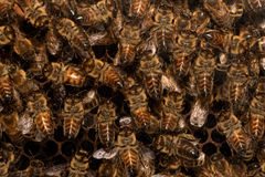 Busy as a bee. Some bees in a beehive / beeyard Royalty Free Stock Photography
