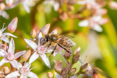 `Busy As a Bee`  2-6. According to research, a large beehive has over 80,000 bees. They collect nectar from million of plants to make a pound of honey. And also Stock Photography