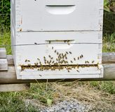 A Busy of a Bee Hive Royalty Free Stock Photography