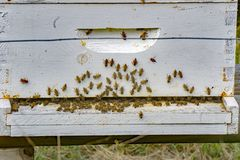 A Busy of a Bee Hive Stock Photography