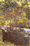 Busy bees. Royalty Free Stock Image