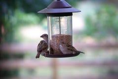 Busy Bird Feeder. Several birds feeding from a bird feeder royalty free stock photography