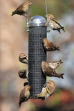 Busy bird feeder Royalty Free Stock Image