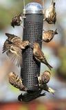 Busy bird feeder royalty free stock image
