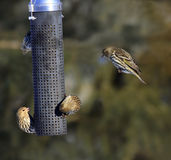 Busy bird feeder Stock Images