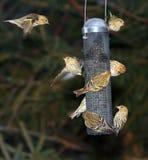 Busy bird feeder royalty free stock photography