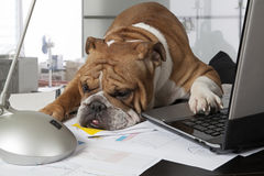 Busy day in the office Royalty Free Stock Photo