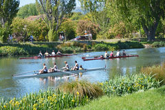 A busy Day for Rowers on the Avon River, Christchurch. Royalty Free Stock Image