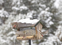Busy House FInches At Feeder In Winter Royalty Free Stock Image