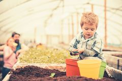 Busy kid filling orange, green and yellow pots with soil. Cute blond boy playing in greenhouse while his parents stand royalty free stock photography
