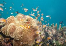 Busy life on coral reef stock image