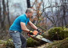Lumberjack working with chainsaw royalty free stock images