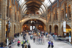 Busy morning at the Natural History Museum. A busy morning at the Natural History Museum in London Royalty Free Stock Images