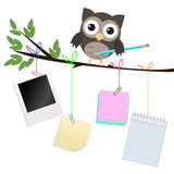 Busy owl isolated on white. Little brown owl on branch with pencil and different kind of note papers hanging of the  branch Royalty Free Stock Photo
