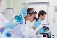 Busy researchers working on experiments in lab Stock Image